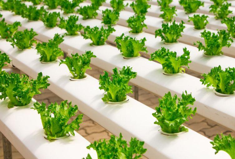 Ý tưởng kinh doanh ít vốn - bán thực phẩm tươi