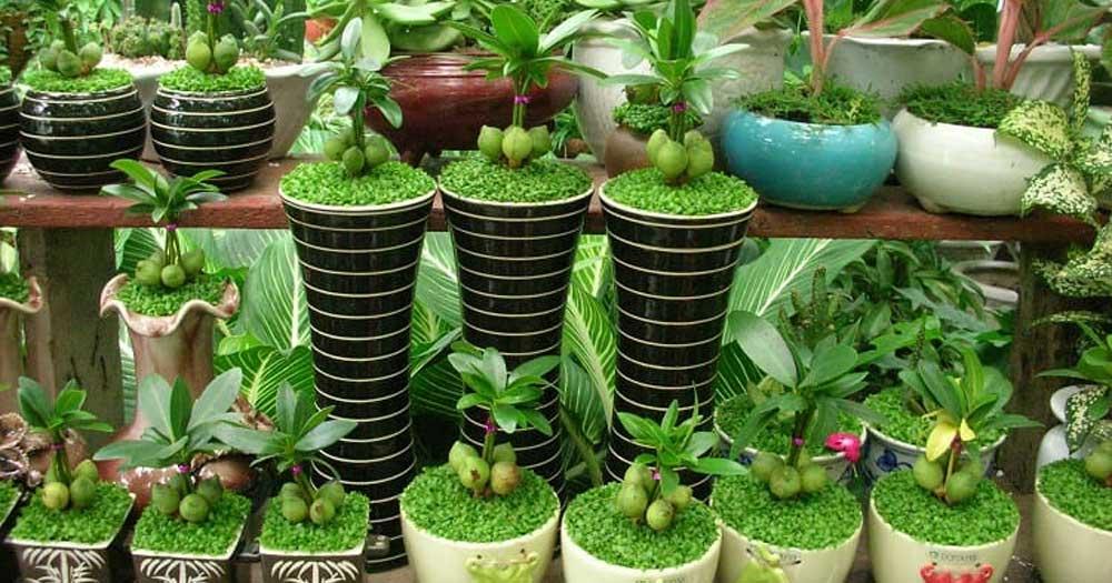 Mô hình kinh doanh cây cảnh mini ở nông thônMô hình kinh doanh cây cảnh mini ở nông thôn